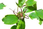 Spider on leaves — Foto Stock