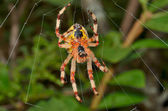 Spider on spider web — Stock Photo