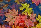 Herfstbladeren op water — Stockfoto