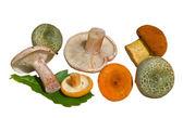Mushrooms (Agaric) — Stock Photo