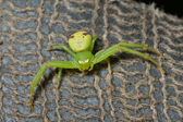 Green spider — Stock Photo