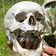 Human Skull on Hand - Stock Photo