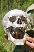 Human Skull on Hand — Stock Photo