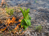 Grass and Fire — Stock Photo