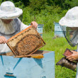 Beekeepers at hive - Stock Photo