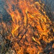 Flame of brushfire — Stock Photo