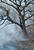 Suppression of forest fire — Stock Photo
