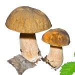 Mushrooms (Cape) — Stock Photo #26262487
