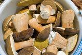 Mushrooms in bucket — Stock Photo