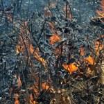 Flame of brushfire — Stock Photo