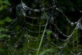 Spider-web with dew — Stock Photo