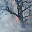 Stock Photo: Suppression of forest fire
