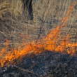 Stock Photo: Flame of brushfire