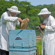 Stock Photo: Beekeepers at hive