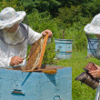 Beekeepers at hive — Stock Photo #35857627