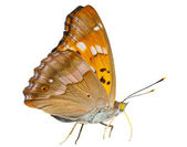 Butterfly (Apatura substituta) — Stock Photo