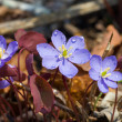 Flowers of early spring  — Stockfoto