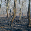 After forest fire — Stock Photo #37027403