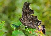 Butterfly on leaf — Стоковое фото