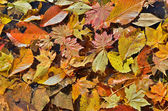 Folhas de outono na água — Foto Stock