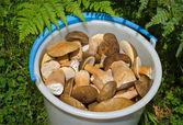 Bucket with mushrooms — Stock Photo