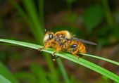 Fly on grass-blade — Стоковое фото