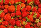 Baies de fraise — Photo