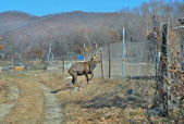 Deer on garden — Stock Photo