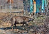 Deer in net — Stock Photo