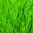 Green grass — Stock Photo #12621254