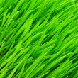 Green grass — Stock Photo #12621259