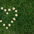 Daisy heart in a meadow — Stock Photo