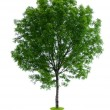 Stock Photo: Isolated tree