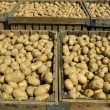 Large bins full of potatoes — Stock Photo