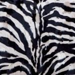 Zebra background — Stock Photo #12621687