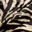 Zebra background - Stock Photo