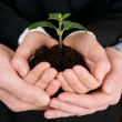Growing green business - Stock Photo