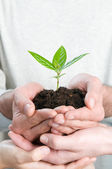 Growing fresh sprout — Stock Photo