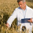 Technician in a wheat field — Foto Stock