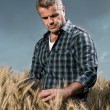 Farmer has care of his wheat field — Foto Stock