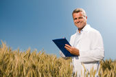 Wheat quality control — Stock Photo