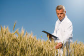 Quality control in wheat field — Stock Photo