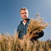 Farmer with bunch of wheat — Stock Photo