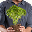 Happy Young Man Holding Plant — Foto de Stock