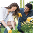 Couple Planting Plant In Garden — Stock Photo