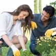 Stock Photo: Couple Planting Plant In Garden
