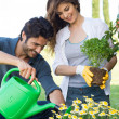 Young Couple Gardening Together — Stock Photo #28206741
