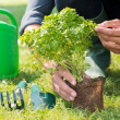 Closeup Of Man'Planting Plant — Stock Photo