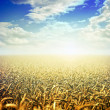 Field on sunrise — Stock Photo