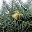 Fir branches, pine, green, bell, Christmas, New Year, — Stock Photo